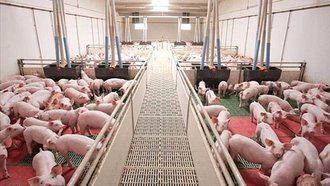 Un informe del Hospital de Albacete alerta de los riesgos para la Salud Pública relacionados con la instalación de macrogranjas de cerdos