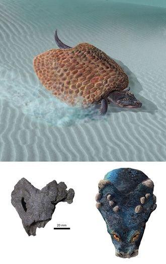 Describen una nueva especie de placodonto que habitó en Guadalajara durante el Triásico Superior