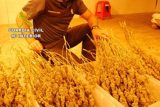 La Guardia Civil desmantela una plantación de marihuana en Fuentenovilla