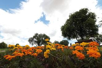 Ambiente soleado y 17ºC de mínima y 33ºC de máxima este martes de agosto en Guadalajara