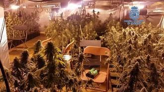 Desmantelan un laboratorio con 380 plantas de marihuana en Toledo