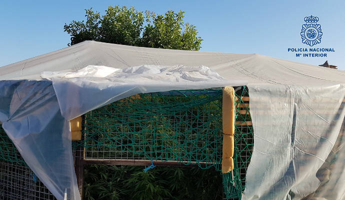 Desmantelado un centro de cultivo ilegal de 300 plantas de marihuana 'cannabis sativa' en Talavera