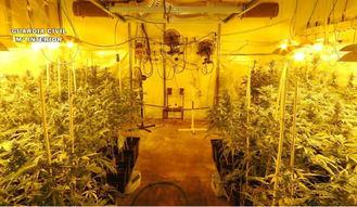 Incautan en Toledo 628 plantas de cannabis sativa viva y 9.641 gramos de marihuana