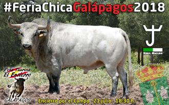 El encierro por el campo protagoniza la VI Feria Chica de Galápagos