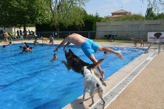 Personas y perros compartieron chapuzones en el Aquadog de Villanueva de la Torre