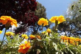 Más calor este sábado de octubre en Guadalajara donde el brillará el sol y el mercurio rozará los 30ºC