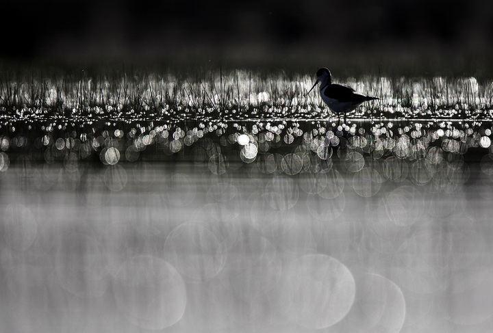 La feria ornitológica más prestigiosa del Mediterráneo premia a un fotógrafo naturalista de Valdeluz