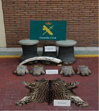 La Guardia Civil ha incautado una piel de ocelote en la ciudad de Toledo
