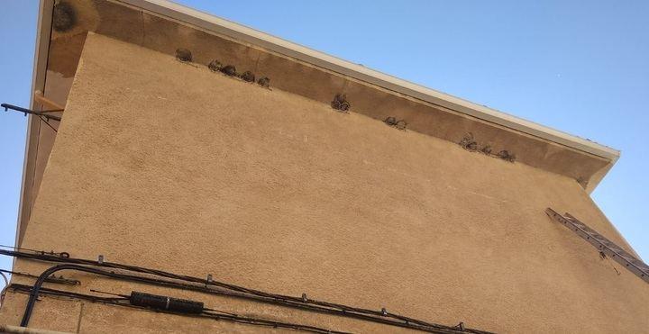 Ecologistas en Acción Guadalajara recuerda que los nidos de golondrina están protegidos