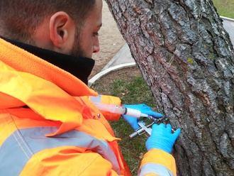 Más de 1.000 pinos de Guadalajara, objeto de un tratamiento mediante endoterapia para reducir la procesionaria