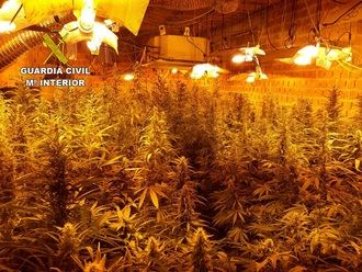 La Guardia Civil desmantela una plantación de más de 1.200 plantas de marihuana en Fuentenovilla
