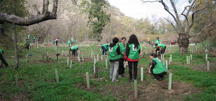 El domingo en Castillejos, WWF llevará a cabo una nueva campaña de plantación