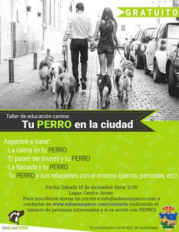 """El sábado 15 de diciembre, nueva oportunidad para participar en el taller gratuito """"Tu perro en la ciudad"""""""