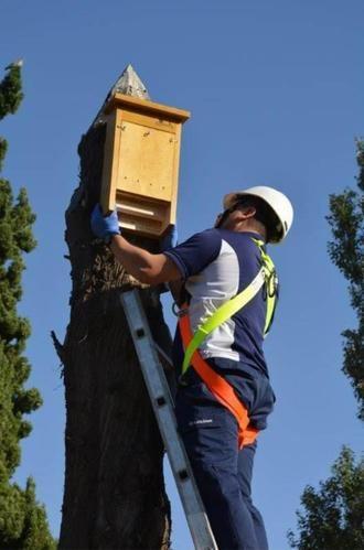 Instalan 15 cajas-nido para murciélagos en Azuqueca para controlar las plagas de mosquitos en verano