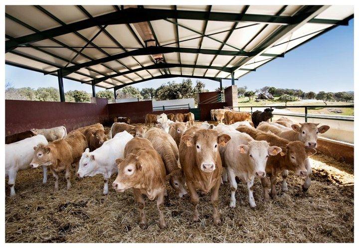 Ecologistas en Acción tampoco quiere macrogranjas de vacas en el Alto Tajo