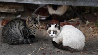 El plan de control de colonias felinas de Valdeluz y Yebes facilita la esterilización de 20 gatos callejeros