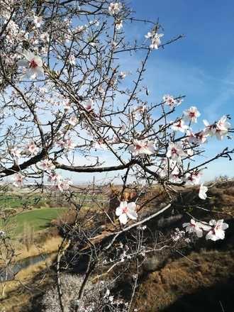 Guadalajara comienza el mes de marzo con cielos soleados y con 5ºC de mínima y 20ºC de máxima