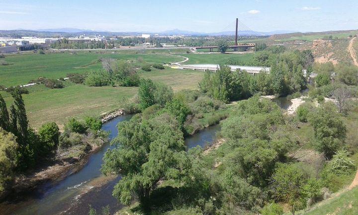 Ayer en el Río Henares Foto : Jacinto García Duro