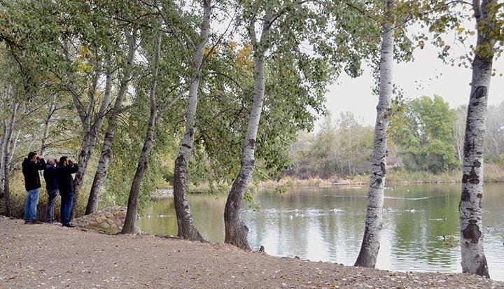 La Reserva Ornitológica Municipal de Azuqueca, incluida en el Inventario nacional de zonas húmedas