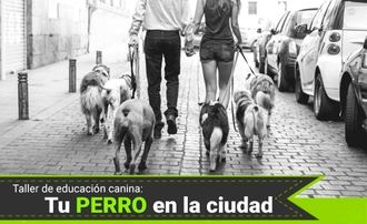 El sábado 16 de marzo, nuevo taller de educación canina en Guadalajara