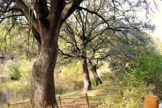 El Plan de Gestión de Valdenazar recoge medidas para conservar el bosque y regular y potenciar su uso público