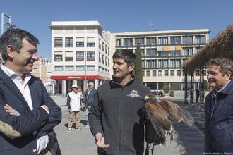 El Ayuntamiento de Guadalajara adopta medidas para controlar la proliferación de aves en la ciudad y reducir sus molestias