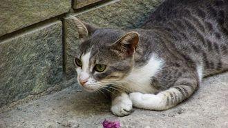 Horche esterilizará a los gatos callejeros para que cada vez haya menos