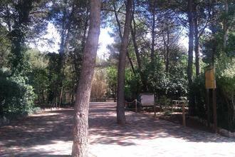 Este fin de semana, talleres gratuitos de educación canina y de cultivo del bonsái en Guadalajara
