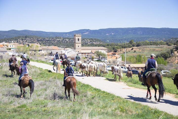 La VI Trashumancia de Azañón reunió a más de 80 caballistas que guiaron a tres paradas de bueyes