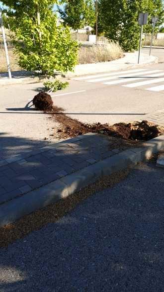 Acto vandálico contra árboles recién plantados en Cabanillas