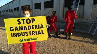 Greenpeace se mete en una macrogranja de cerdos de Hellín para denunciar la contaminación