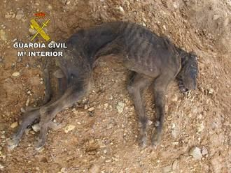 La Guardia Civil investiga un caso de maltrato animal en El Casar