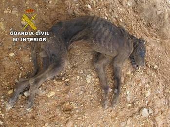 La Guardia Civil investiga un caso de maltrato animal en El Casar