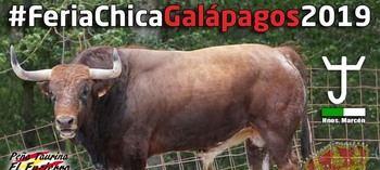 Galápagos inaugura la temporada de encierros por el campo en la provincia