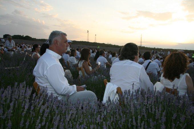 Brihuega celebra su VIII Festival de la Lavanda