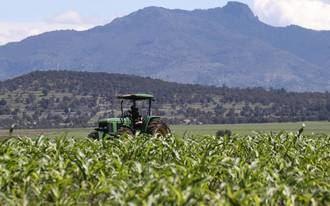La APAG denuncia robos de maíz a agricultores en varias zonas de Guadalajara