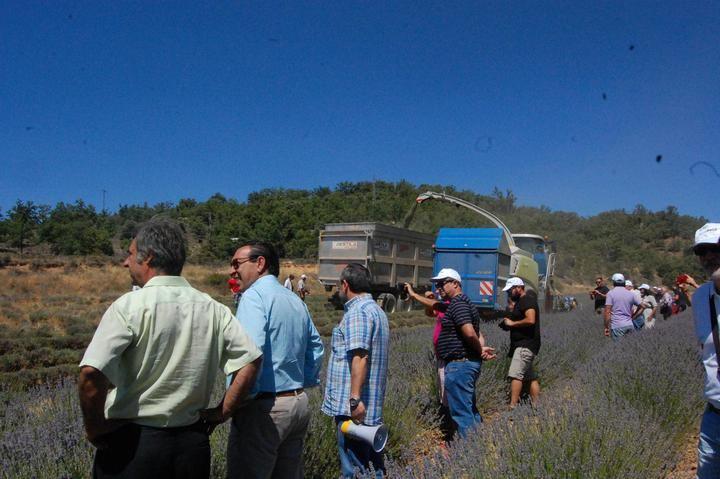Alrededor de 200 personas analizan el futuro de las plantas aromáticas en Cifuentes