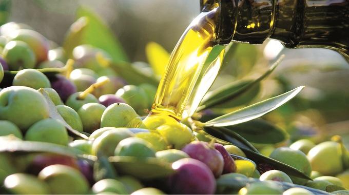 La producción de aceite de oliva en CLM caerá un 60% por la falta de lluvias