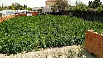La Guardia Civil desmantela una de las mayores plantaciones exteriores de marihuana en la provincia de Toledo