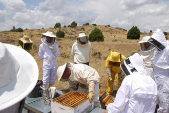 """La """"VIII Jornada de Apicultura"""" permite al apicultor reciclarse en manejo y sanidad apícola"""