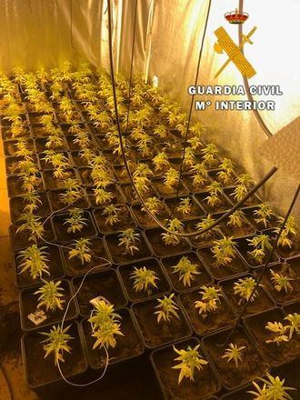 La Guardia Civil detiene a una persona en Nambroca por cultivo de estupefacientes