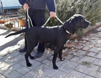 El Ayuntamiento de Cabanillas inicia una nueva campaña contra los excrementos caninos en la vía pública
