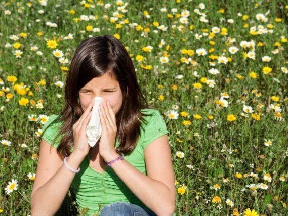 Los alergólogos pronostican una primavera atípica en Castilla-La Mancha con niveles elevados de gramíneas y menos polinización del olivo