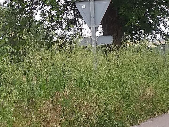 Arbancón denuncia el estado de abandono de las cunetas de la carretera GU-143