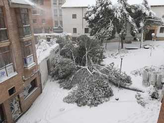 ATENCIÓN : Riesgo extremo en la vía pública por caídas de árboles y desprendimientos de nieve en fachadas y cornisas de Guadalajara capital