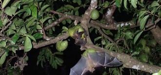 Los claros del bosque, claves para la conservación de los murciélagos