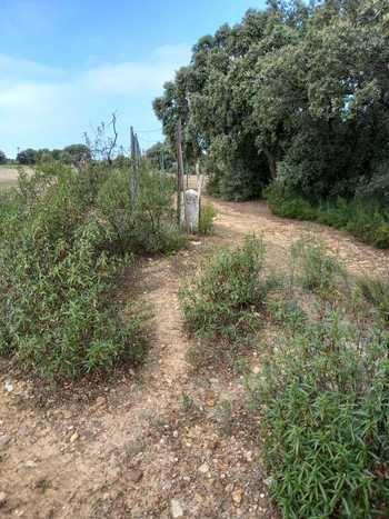 Ecologistas en Acción y WWF/España en Guadalajara denuncian que el Ayuntamiento de Cabanillas vende un camino vecinal por ¡0,15 euros el metro cuadrado!