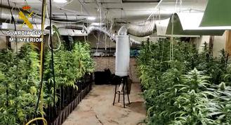 Dos plantaciones ilegales de marihuana en Ciruelos desmanteladas por la Guardia Civil