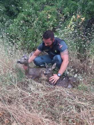 La Guardia Civil del VIso del Marqué salva a una hembra de corzo y su cría de una muerte segura por ahogamiento
