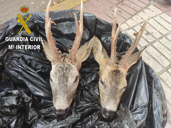 La Guardia Civil denuncia a una persona por transportar dos cabezas de corzo en un vehículo en Azuqueca